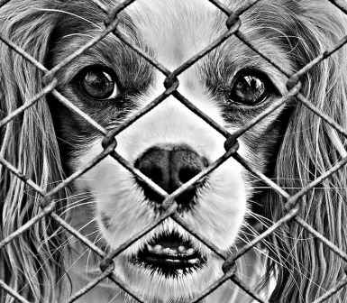 animal-welfare-1116194_960_720